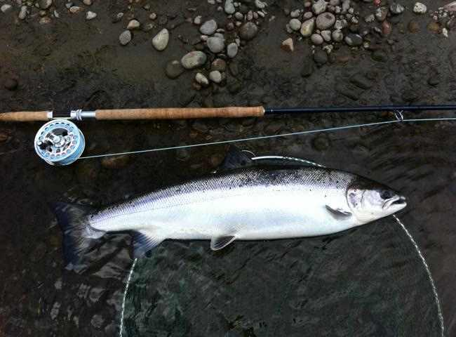 River Tay Fishing Holidays