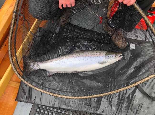 River Tay Salmon Fishing