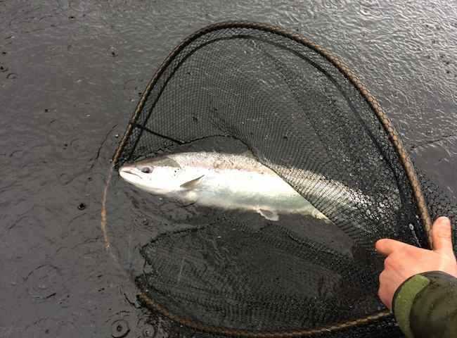 Salmon Fishing Trips