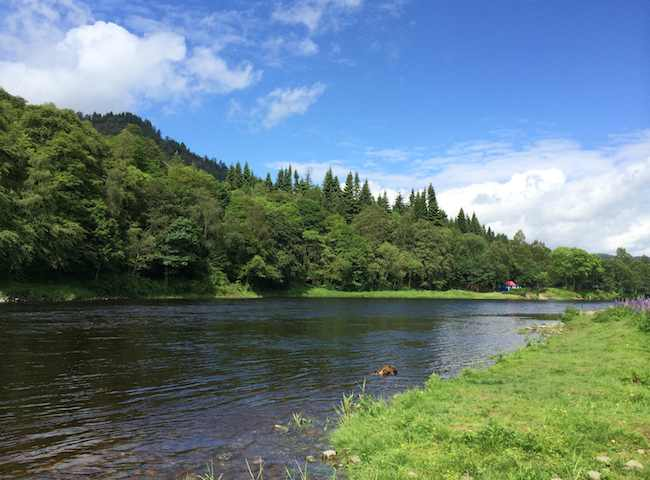 Look at the fine photograph of the River Tay which is one of Scotland's premier salmon fishing destinations. All of the Scottish salmon rivers have vast amounts of natural beauty & charm.