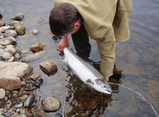 Catch An Atlantic Salmon
