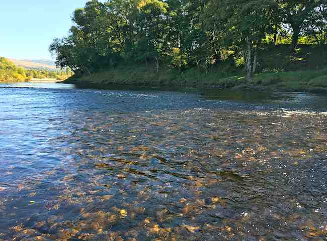 Perfect Salmon River Habitat