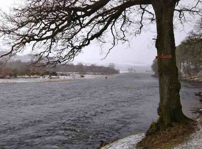 Spring On The River Tay