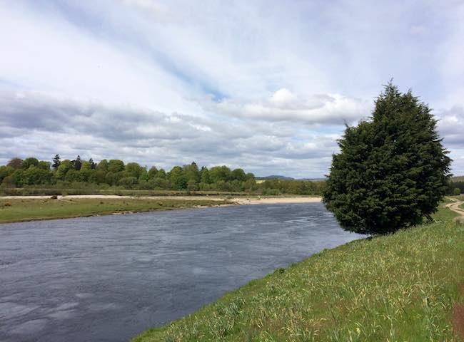 Salmon Trips River Tay