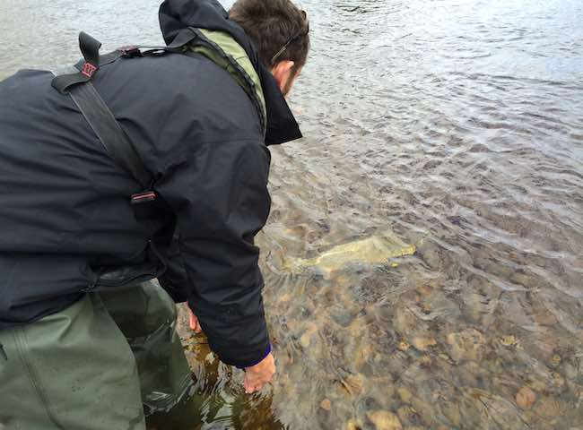 Catch & Release In Scotland