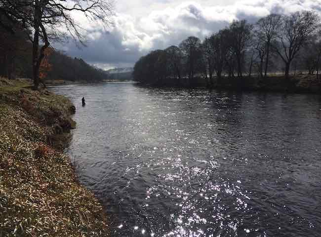River Tay Fishing Days