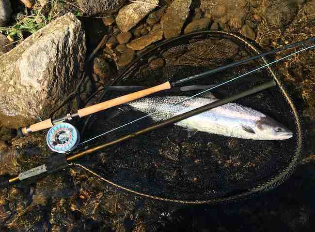 River Tay Summer Fishing Trips