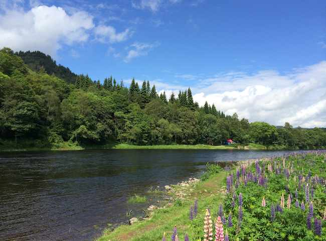 River Tay Salmon Beats