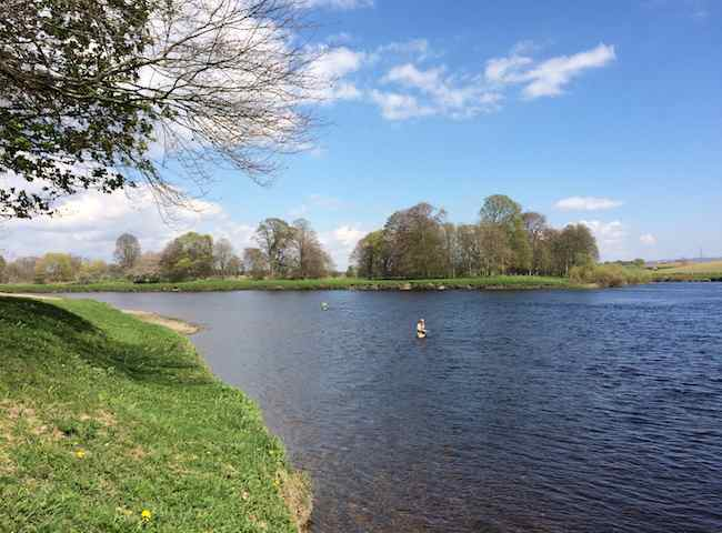 Fishing Holidays On The River Tay