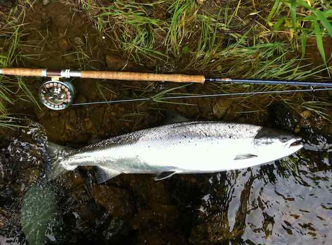 River Tay Fishing Breaks