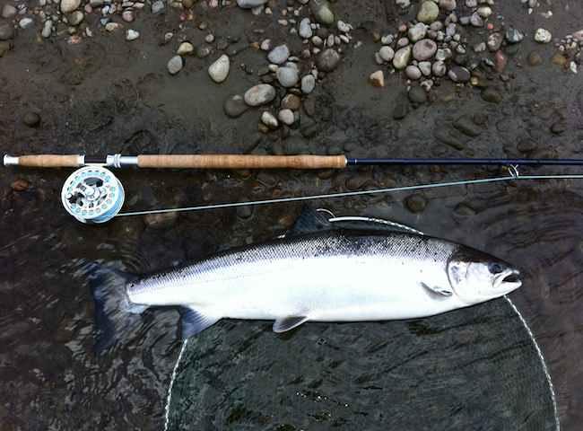 River Tay Spring Salmon