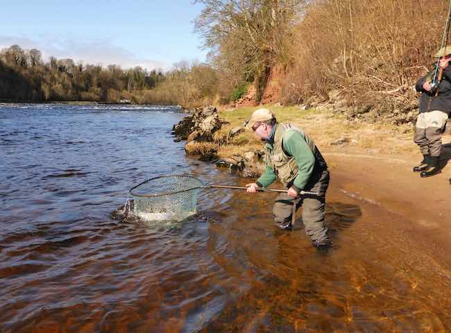 Fish Scotland Fpr Salmon