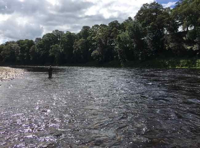 River Tay Fly Fishing