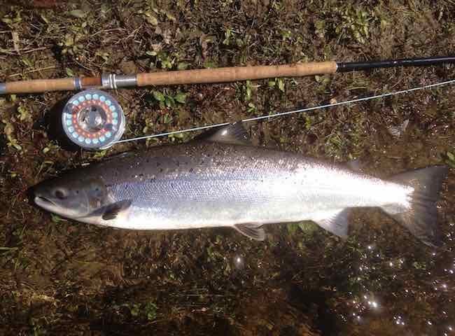The River Tay Spring Salmon