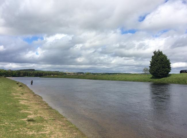 Scotland has over 400 hundred salmon rivers that are all easily accessible from the major Scottish cities. The big four rivers are the Tay, Dee, Spey and Tweed and all of these venues fish well from early Spring through to late Autumn.