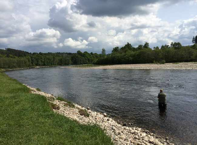 The riverbank scenery on the Scottish salmon rivers is truly immense throughout all of the seasonal fishing months of the year. The river environment really does play a big part in the satisfaction levels of Scottish salmon fishing.