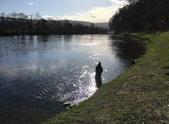 The River Tay is one of many Scottish salmon rivers that have amazing natural beauty and consistent runs of salmon throughout the long Scottish salmon fishing season.