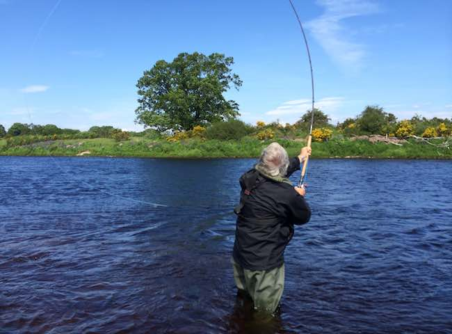 Here's a lovely Speycasting shot taken from the banks of Scotland's famous River Tay. If you book a professional salmon fishing guide you receive high quality Spey casting and salmon fishing tactical tuition as part of that professional service which will also increase your chances of success.
