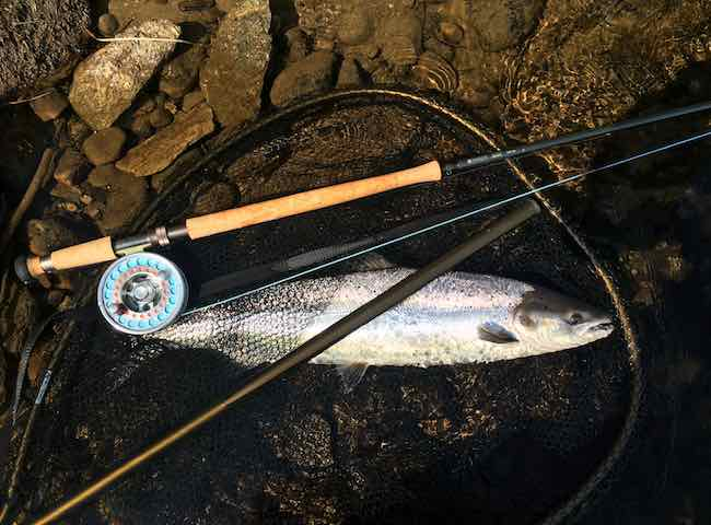 The biggest thrill in Scottish salmon fishing if build quality of fish and the salmon fight are important to you is from a fresh run Spring salmon when caught on a fly rod. These perfect fish are indeed the highlight of the vast majority of Scottish salmon fisher's season.