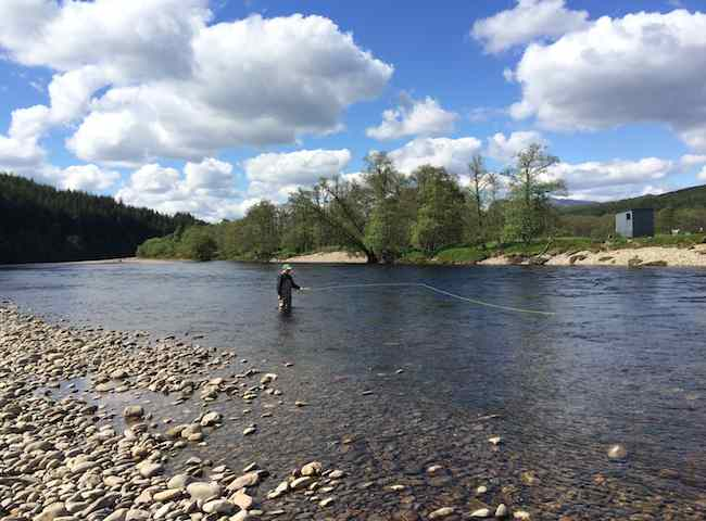 Here's a lovely late Spring shot of an angler out on the River Tay's tributary River Tummel which has always been a great Spring salmon venue. Knowing where to be positioned on the Scottish rivers throughout the long Scottish salmon fishing season is half the battle for success.