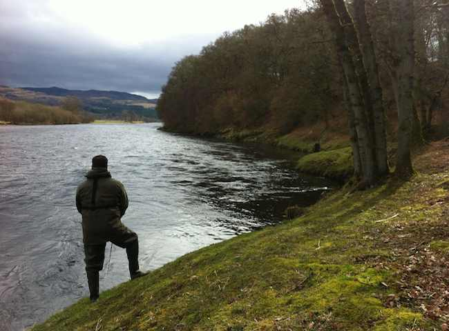 Here's a shot of a River Tay salmon fisher methodically working his way down through the perfect salmon pool which is located directly downstream of the River Tummel junction in anticipation of a prized Spring salmon.