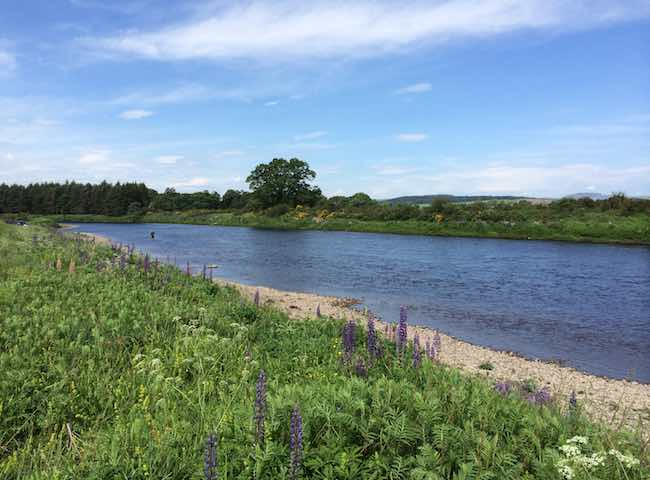 Scotland's famous River Tay is the most perfect Scottish salmon river of all for many good reasons. The Tay's vast and secluded natural riverbanks are one such factor that have to be witnessed to be truly appreciated.