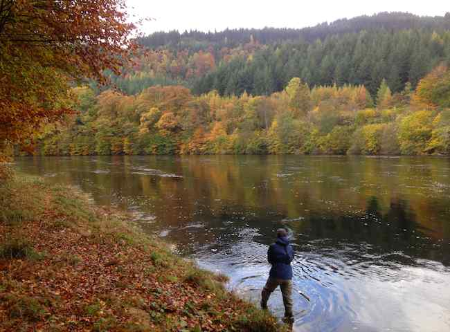 Salmon Rivers In Scotland During The Autumn Months