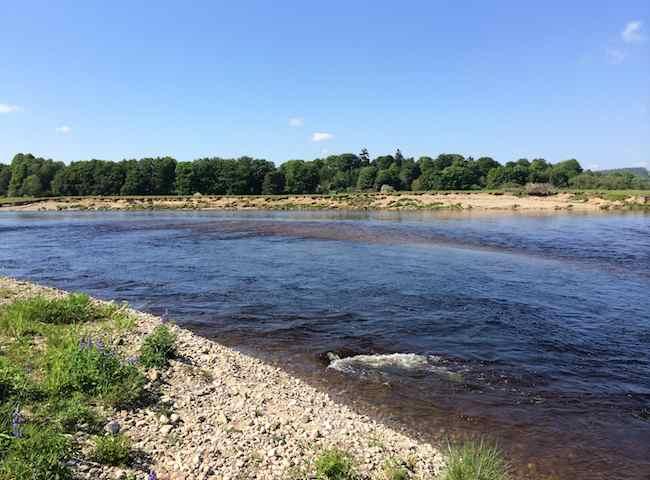 The River Tay Has Superb Salmon Fishing Venues