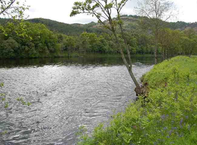 Perfect Salmon Fishing Water On The River Tay Near Dunkeld