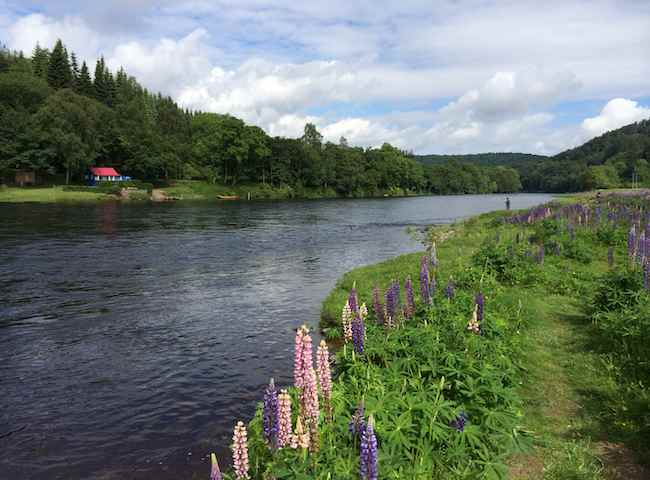Come And Fish The Mighty River Tay For Salmon