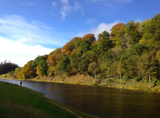 The River Tweed Is The Most Prolific Salmon River In Scotland During Late Autumn