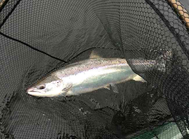 Catch A Scottish Spring Salmon