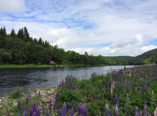 Come Salmon Fishing To Scotland