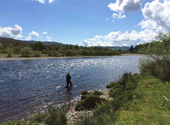 Catching Salmon In Scotland