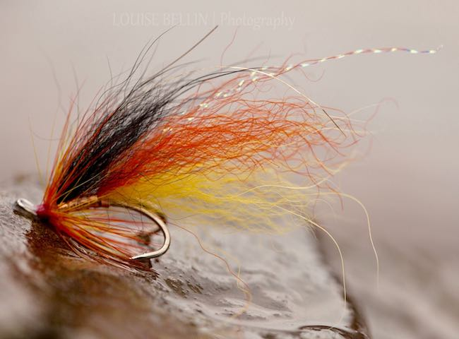 Fly Fishing For Salmon