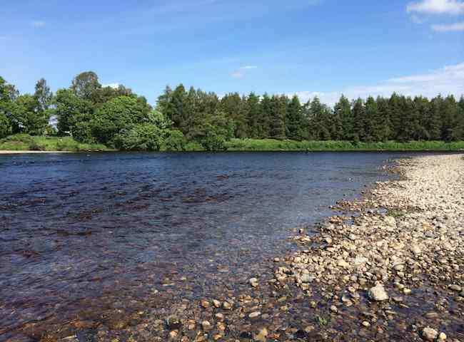 River Fly Fishing For Salmon