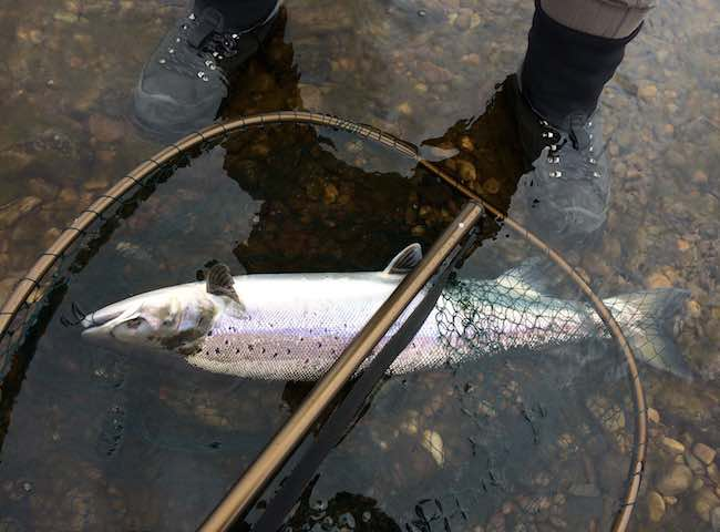 Success On The River Tay