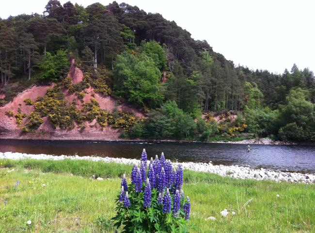 Fishing Trips On The River Spey