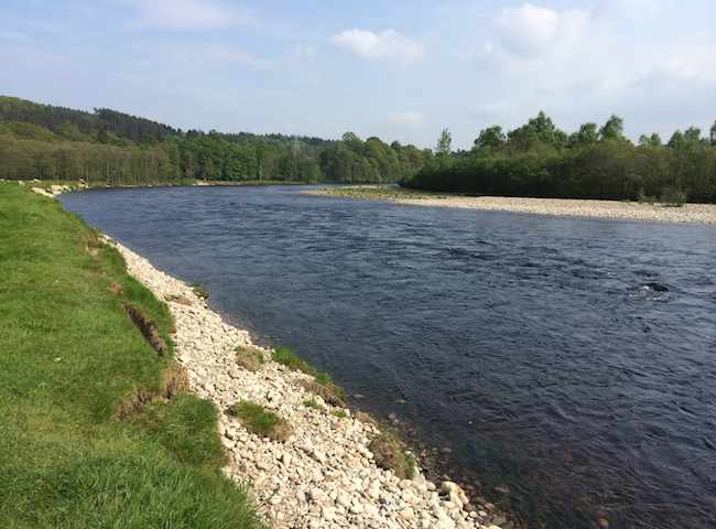 The River Tay has many fine and independently large salmon fishing tributary rivers. The River Tummel is however one of the most renowned when it comes to Spring salmon fishing as the bulk of Tummel salmon show up at that time.