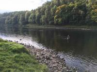 Quality Salmon Fishing On The River Tay