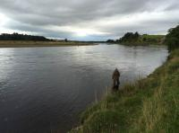 The River Tay Salmon Angler