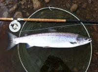 Fishing In Scotland For Salmon