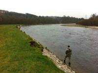 Fishing A Salmon Pool