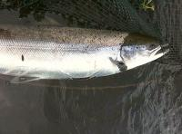 Salmon Fishing Guides Of Scotland