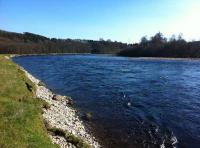 Spring Salmon Fisheries In Scotland