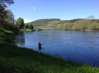 Fishing In Summer On The River Tay
