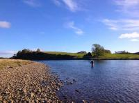 Summer Salmon Fishing On The River Tay