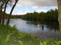 The Tranquilty & Beauty Of The Salmon River