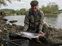 Catching Salmon In Springtime